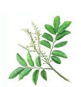 NEW DIRECTIONS AUSTRALIA尖香脂果豆木精油